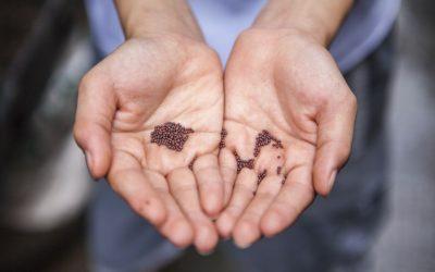 L'impact de notre alimentation sur l'environnement